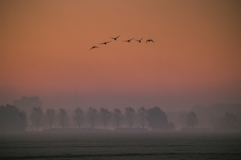 Nummer 6 Publieksprijs Fotowedstrijd IJsselstein 2019 - Daphne Hauer met Zonsopkomst vanuit het IJsselsteinse Bos
