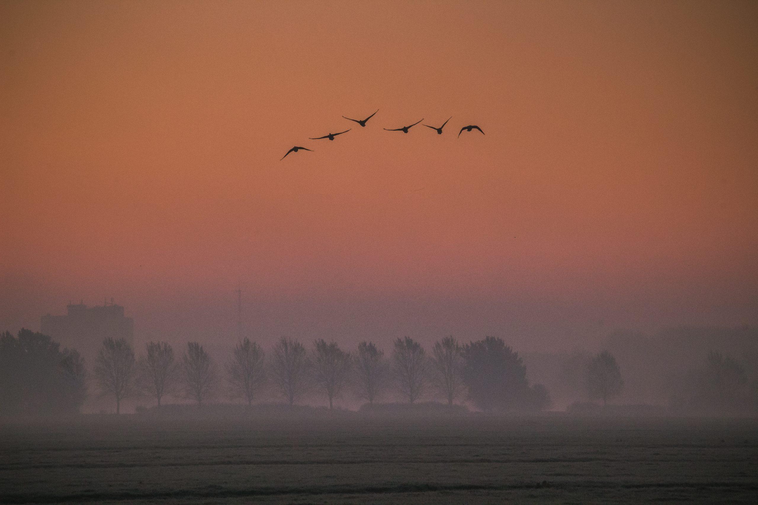 Nummer 6 Fotowedstrijd IJsselstein 2019 - Daphne Hauer - Zonsopkomst vanuit het IJsselsteinse Bos